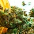 Medical Cannabis To Ease The Pain And Some Others