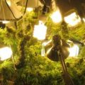 Growing Marjuana Indoors